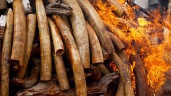 In Kenia wird beschlagnahmtes Elfenbein verbrannt (Archiv)
