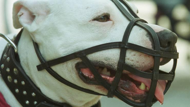 Das Bundesgericht hat den Halter einer Argentinischen Dogge vom Besuch eine Hundekurses befreit. (Symbolbild)