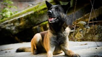 """Der Polizeihund """"Flash"""" hat das Diebesgut aufgespürt."""