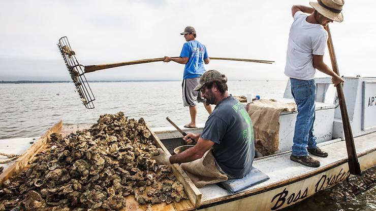 Muschel-Fischer in der Nähe von Eastpoint vor der US-Küste Floridas. (Archivbild)