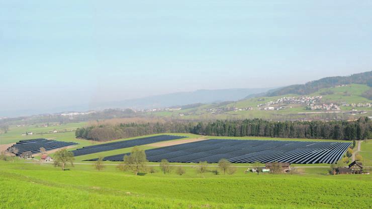 Angrenzend an die Gemeinde Dietwil will die CKW auf einer Freifläche das grösste Schweizer Solarkraftwerk erstellen.