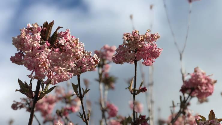 Frühling - wie schön Du bist!