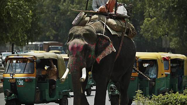 Alltag auf Neu Delhis Strassen