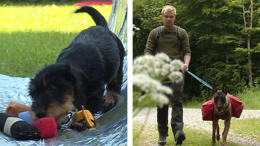 Dackelzauber / Wanderrucksack für den Hund