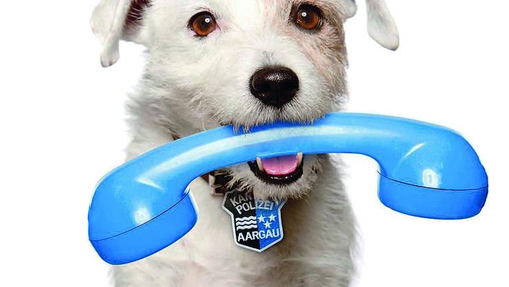 Poli bringt den Hörer: Der Drogenspürhund ist inzwischen pensioniert, warnt aber weiterhin die Aargauer.