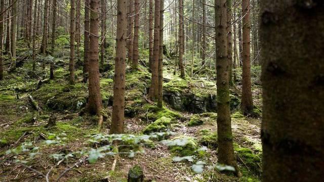 Nach Ansicht des Branchenverband wird das Holz des Schweizer Waldes zu wenig genutzt
