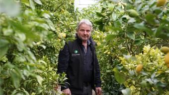 Gärtnermeister Anton Sonderegger, hier inmitten der Zitrusfrüchte, die er für seine Kunden überwintert, ist enttäuscht über die fehlende Unterstützung des Kantons für das neue Ausbildungszentrum für die Solothurner und Berner Gärtnerlehrlinge.