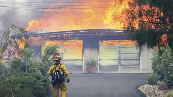 Hunderte weitere Häuser bedroht: Im nordkalifornischen Alpine zerstört ein Buschbrand ein Gebäude.
