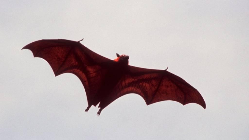 Ausgeschaltetes Licht hilft Fledermäusen bei der Jagd