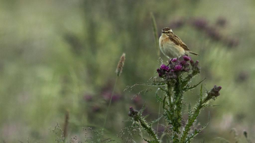 Forscher warnen vor Vogelsterben
