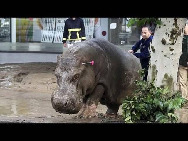 Überschwemmung in Tiflis wird Menschen und Tieren zum Verhängnis