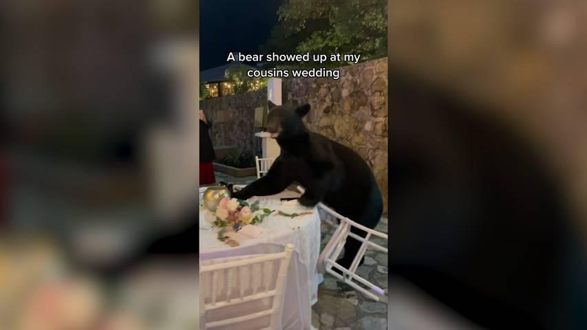 Bär crasht Hochzeit in Mexiko