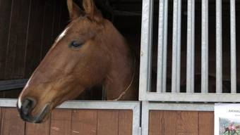 Auf dem Gebiet der Gemeinde Mülligen wurde bei einem Pferd die Krankheit Infektiöse Anämie festgestellt. (Symbolbild)