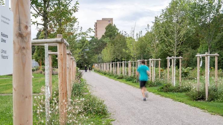 In der Zukunftsallee testet die Stadtgärtnerei, welche Bäume in Zürich künftig gedeihen könnten.