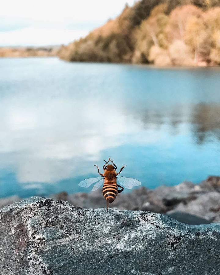 Eine Biene aus Frankreich hat auf Instagram über 150'000 Follower. (© Instagram/bee_nfluencer)