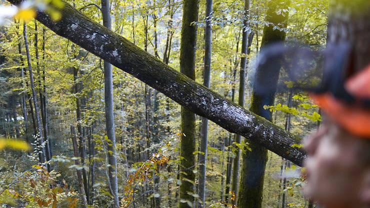 Die Schweizer Forstwirtschaft hat im vergangenen Jahr mehr Holz geschlagen, aber weniger verdient. und die Aussichten sind wegen des starken Frankens nicht rosiger. (Archivbild)