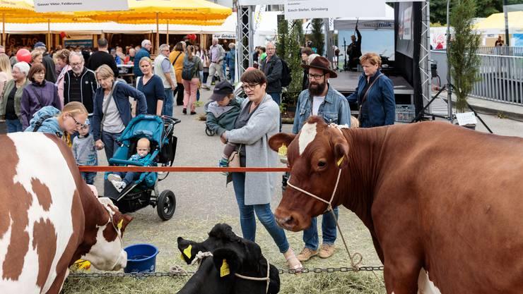 Chästag 2019: Viehschau auf dem Dornacherplatz
