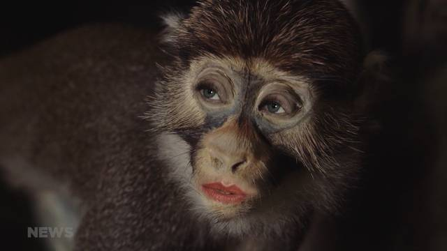 Sprechende Tiere: Geschäftsbericht mit Humor