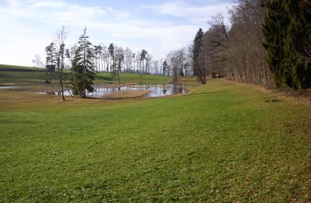 Teich in Hinwil Rüti