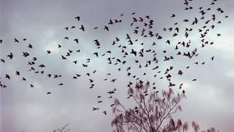 Die Ansteckung von Hausgeflügel durch Wildvögel muss verhindert werden, bis der Vogelzug vorbei ist. Walter Schwager