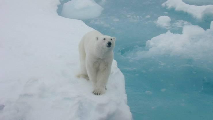 Der Eisbär hat jetzt auch wieder kälter: Am Nordpol ist nach einem ausserordentlichen Wärmeschub die Temperatur wieder gefallen. Nach null Grad am Mittwoch war es am Donnerstag um die 15 Grad minus - und damit näherte sich die Temperatur wieder normalen Werten an. (Archivbild)