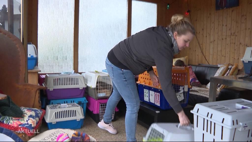 Über 100 Kaninchen gerettet