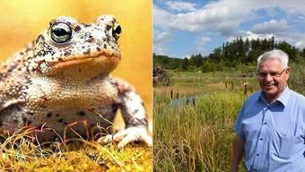 Bürgergemeindepräsident Emil Lämmle im Naturschutzreservat Aegerten, wo auch die etwa 5 Zentimeter grosse Kreuzkröte vorkommt.