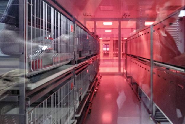 Die Labors sind mit einer speziell entwickelten roten Folie verklebt