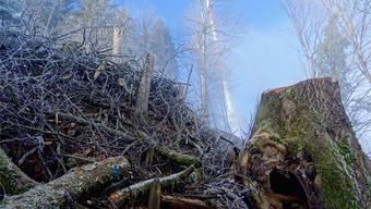 Vor einem Jahr liess die Stadt Zürich über 2000 Bäume fällen. Das Holz wurde bis nach China verkauft, was Naturschützer verärgert.
