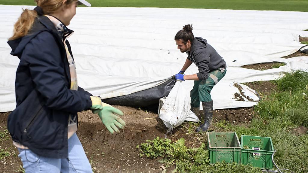 Berner Bauern ziehen positive Bilanz zu Schweizer Erntehelfern