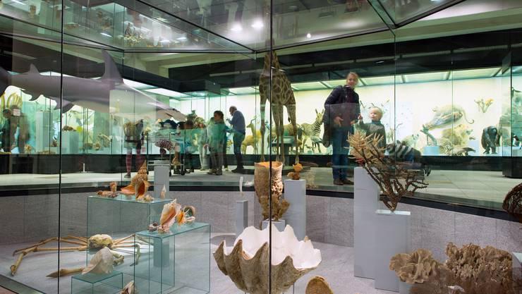 Das Zoologische Museum der UZH ist ein Publikumsmagnet.