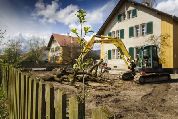 2016 wurde der erste Garten saniert indem der Boden komplett ausgetauscht wurde.