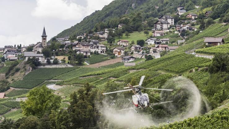 Ein Lama Helikopter der Air Glacier besprüht die Reben gegen Ungeziefer. (Symbolbild)