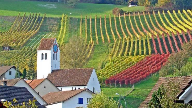 Die Weinkultur spielt in der SRF-Sendung über Remigen eine zentrale Rolle.