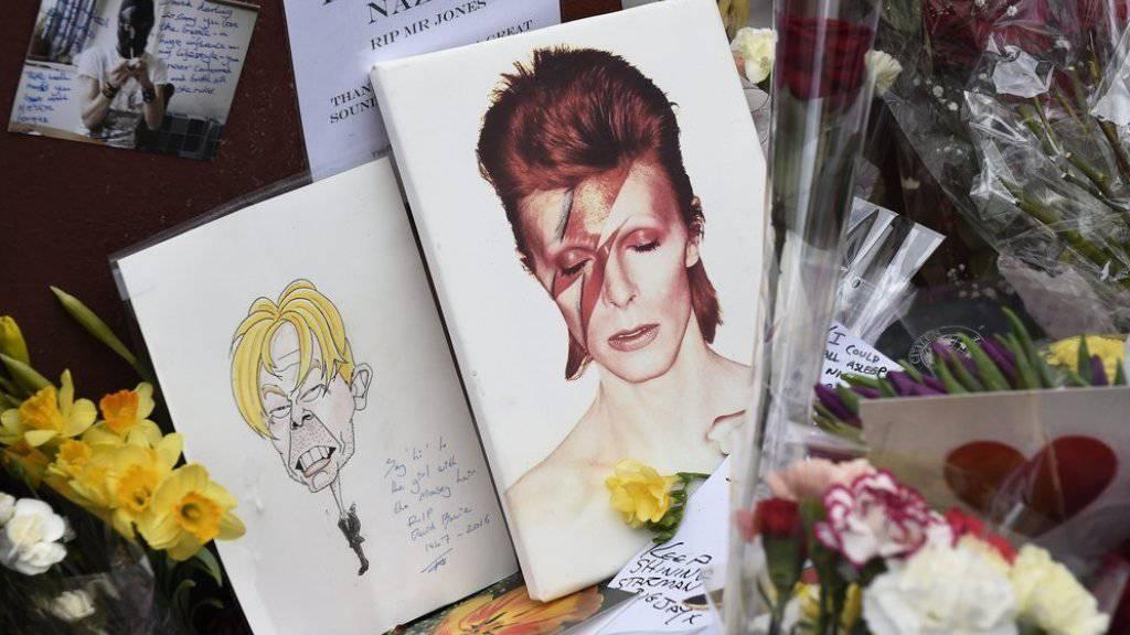 """Grosse Trauer: In Erinnerung an den verstorbenen Musiker hat ein neugeborener Zwergpinguin im Tierpark von Cincinnati den Namen """"Bowie"""" bekommen (Archiv)."""
