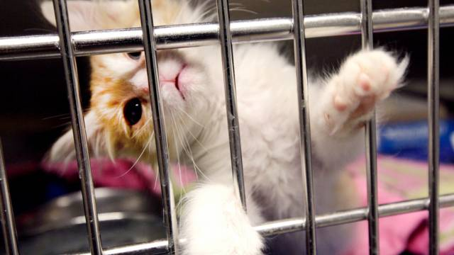 Kätzchen verhielt sich vor dem Tod aggressiv (Symbolbild)