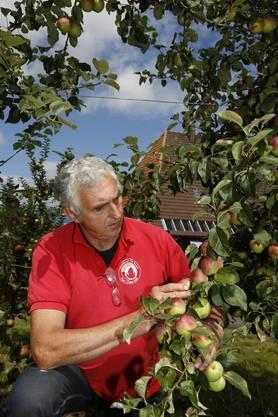 Niklaus Bolliger züchtet Apfelsorten.