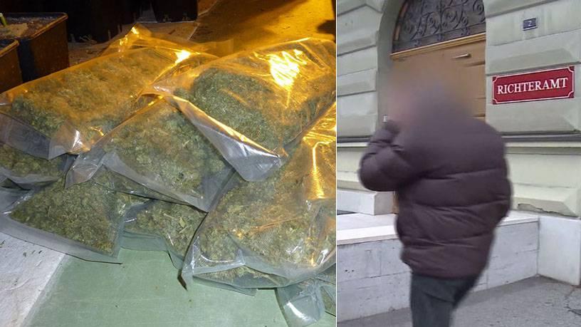 3650 Hanfpflanzen - 75 kg Marihuana