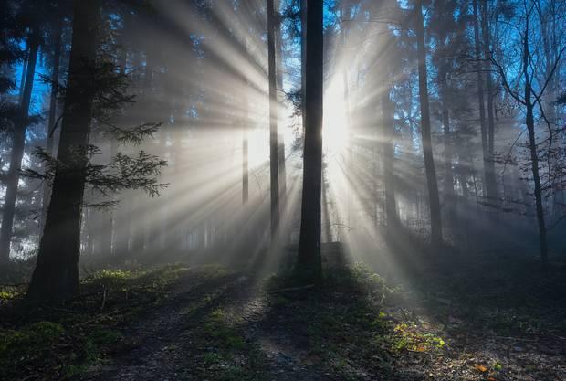 Im Wald ist es jetzt zauberhaft: Wenn die Pflanzen spriessen und Tiere den Frühling spüren, fühlt man die Lebendigkeit der Natur wie kaum zu einer anderen Zeit im Jahr. Vor allem in den Morgenstunden ist der Besuch im Wald ein Erlebnis, hier ein Bild aus dem Boswiler Wald. Auch diesen Vorschlag machten uns einige Leserinnen und Leser, merci.