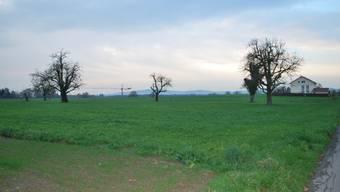 Eselacker Möhlin: Auf der landwirtschaftlich genutzten Fläche sollen dereinst Häuser stehen. (lbr)