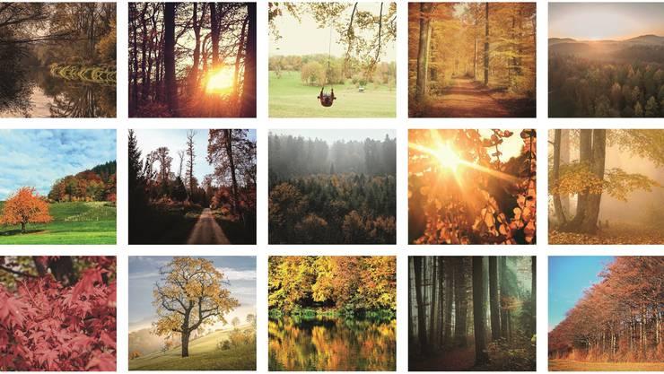 Der Baum, das neue Lieblingsmotiv: In allen Grössen, Farben und Formen werden Bilder von Laubbäumen ins Internet hochgeladen.