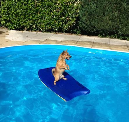 Surfer Strolchi kanns auch im Swimming Pool