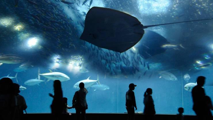 So könnte das «Ozeanium« aussehen.