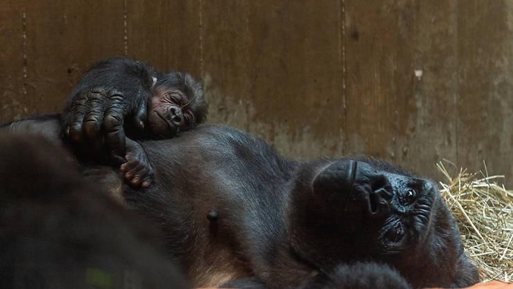 Mutter und Kind sind am Tag nach der Geburt immer noch völlig erledigt.