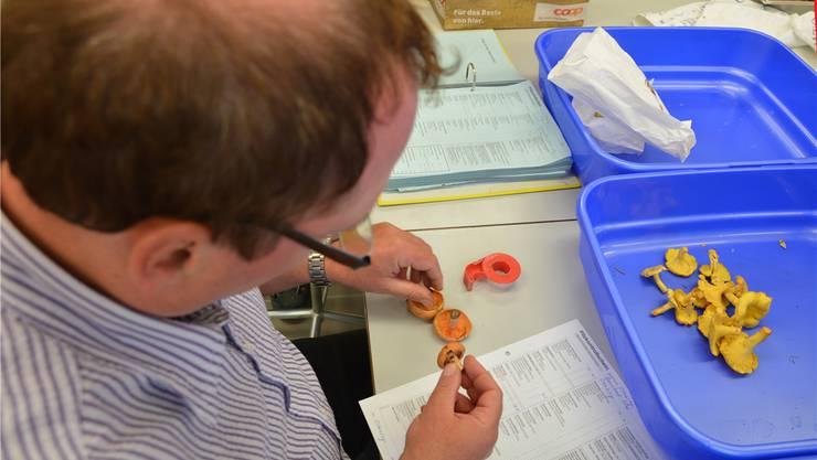 Sämtliche Pilze werden kontrolliert und zu statistischen Zwecken registriert. Den Pilzsammlern wird ein Pilzkontrollschein abgegeben.