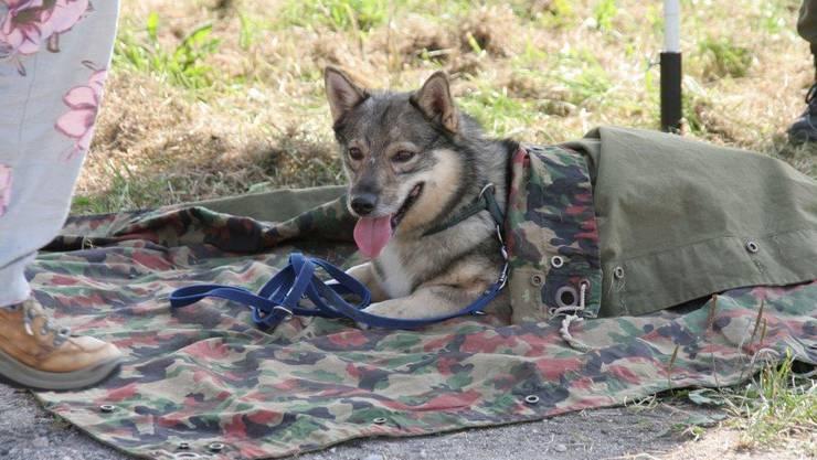 Kurze Pause für den Hund, während Herrchen oder Frauchen arbeiten muss.