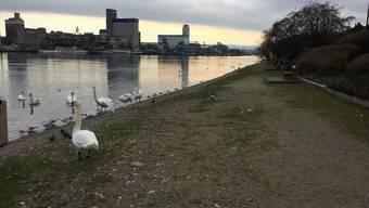 Strand in Huningue, Vögel füttern verboten