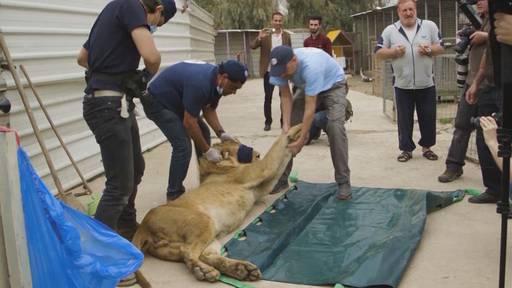 Tierische Rettungsaktion – Vom Kriegsgebiet nach Südafrika, Teil 1