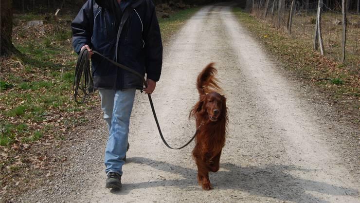 So ist es richtig: Ab Sonntag gilt die Leinenpflicht. Auch für den Hund, der sich im Baselbieter Wald losgerissen hat. Symbolbild Archiv