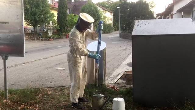 Aarau: Abfallsünder lockt abertausende Bienen an